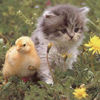 Baby Goose and Kitten 18 22