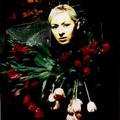 Darcy Dark Roses