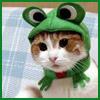 Froggy Cat