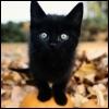 Kitten atop a pumpkin
