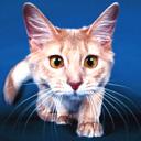 cat avatar 0174