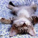 cat avatar 0602
