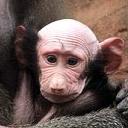 exotic animal avatar 0559